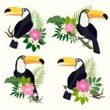 Vektoruppsättning med tukan royaltyfri illustrationer