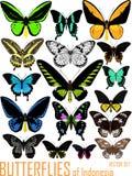 Vektoruppsättningen av fjärilar av Indonesien isolerade på vit stock illustrationer