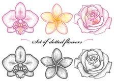 Vektoruppsättningen med den prickiga blomman av orkidén, Plumeria eller frangipanien och steg i svart och i färg som isolerades p vektor illustrationer