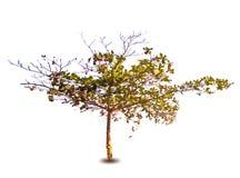 Vektorvårträd Arkivfoto