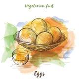 Vektorvattenfärgen skissar vegetarisk mat Eco mat royaltyfria foton