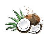 Vektorvattenfärgillustration av kokosnöten vektor illustrationer