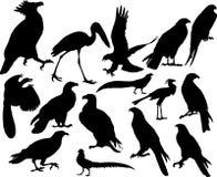 Vektorvögel Lizenzfreie Stockfotografie
