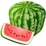 Vektorwassermelone. Stockfotos