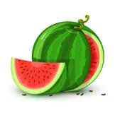 Vektorwassermelonefrucht getrennt auf Weiß Lizenzfreie Stockfotografie