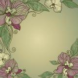 Vektorweinlesefeld mit Blumen - Orchidee Lizenzfreie Stockbilder