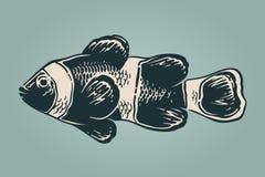 Vektorweinleseillustration von clownfish Lizenzfreie Stockfotografie