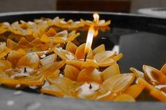 Vela amarela da flor de lótus na bacia imagem de stock royalty free
