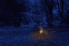 Vela ardiente en el cementerio viejo Foto de archivo