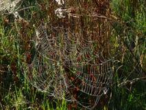 Vela de uma Web de aranha Foto de Stock Royalty Free