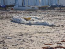Vela praticante il surfing dell'aquilone sulla spiaggia fotografia stock libera da diritti