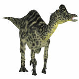 Velafrons Hadrosaur Dinosaur Royalty Free Stock Photo