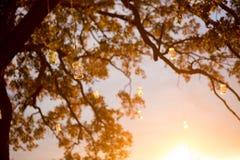 Velas del tarro de albañil Imagen de archivo