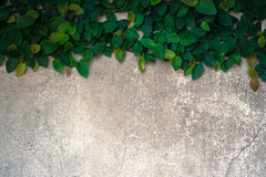The velcro climb on the old concrete wall. The velcro climb on the old concrete wall Royalty Free Stock Photography