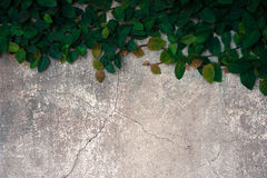 The velcro climb on the old concrete wall. Stock Photos