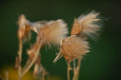 Velcro en automne Photographie stock libre de droits