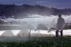 Veldwerk op plattelandsgebieden van Transcarpathië in de lente in Royalty-vrije Stock Foto's