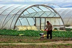 Veldwerk op plattelandsgebieden van Transcarpathië in de lente in Stock Afbeeldingen