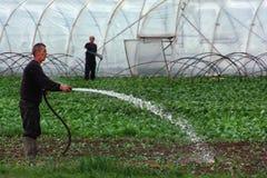 Veldwerk op plattelandsgebieden van Transcarpathië in de lente in Royalty-vrije Stock Afbeelding