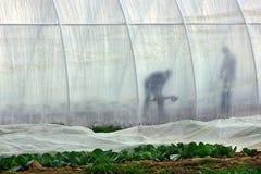 Veldwerk op plattelandsgebieden van Transcarpathië in de lente in Stock Foto's