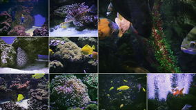 Vele aquariumvissen stock footage