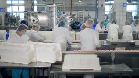 Vele arbeiders pakken voedsel in een faciliteit met transportbanden in stock video