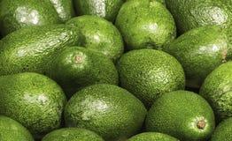 Vele avocado royalty-vrije stock afbeeldingen