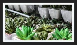 Vele Babycactus in Tuin stock afbeelding