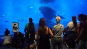 Vele bezoekers in het grote aquarium stock footage