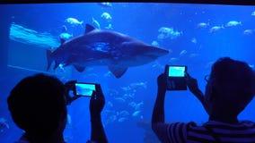 Vele bezoekers in het grote aquarium stock video