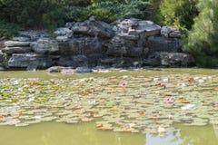 Vele bloeiende witte lelies in het water achter kunstmatige waterval stock foto