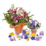 Vele bloemen Stock Afbeelding