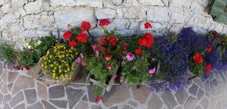 Vele bloemen in bedflower in de tuin stock afbeelding