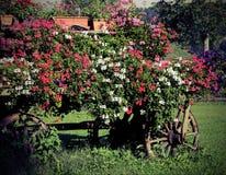 vele bloemen in de oude wagen met vitnageeffect stock afbeelding