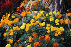 Vele bloemen met verschillende kleuren in het park Stock Foto