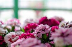 Vele bloemen verschillende kleuren in de zomer stock afbeeldingen