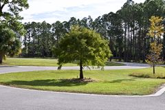 Vele bomen langs een windende weg stock fotografie