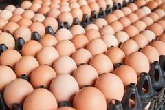 Vele bruine eieren royalty-vrije stock fotografie