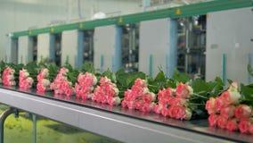 Vele die rozen van de verwerkingsinstallatie klaar worden vervoerd voor verkoop stock videobeelden