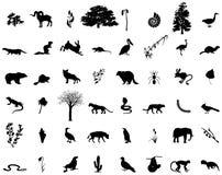 Vele dieren en planten in vector Stock Foto's