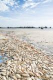 Vele dode vissen die op strand met houten vissersboten op achtergrond bij Senegalese kust, Palmarin, de Delta van Sinussaloum leg Stock Foto's