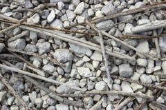 Vele droge rietstelen liggen op grint Royalty-vrije Stock Afbeelding