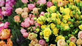 Vele exotische bloemen schikten in één enkele lijn stock footage