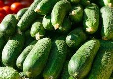 Vele groene komkommers Royalty-vrije Stock Afbeelding