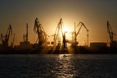 Vele grote kranen silhouetteren in de haven bij gouden licht van sunris stock fotografie
