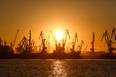 Vele grote kranen silhouetteren in de haven bij gouden licht van sunris stock foto's