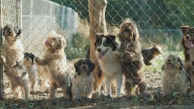 Vele honden van verschillende rassen kijken door het net in een schuilplaats of een kinderdagverblijf stock video