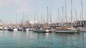 Vele jachten en schepen bij de jachthaven Wordt de Zeilboten vastgelegd bij de kade met zeemeeuwen stock videobeelden