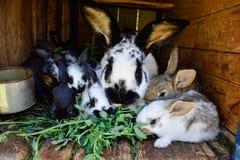 Vele jonge zoete konijntjes in een loods Een groep het kleine kleurrijke voer van de konijnenfamilie op boerenerf Pasen-Symbool royalty-vrije stock fotografie