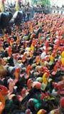 Vele kippen royalty-vrije stock afbeelding